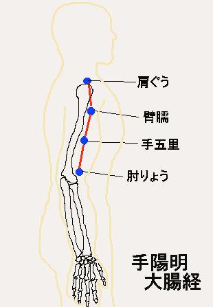 大腸経3.jpg